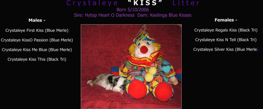 "C r y s t a l e y e     "" K I S S ""     L i t t e r Born 5/10/2006 Sire: Hytop Heart O Darkness  Dam: Keelinga Blue Kisses        Males -  Crystaleye First Kiss (Blue Merle) Crystaleye KissO Passion (Blue Merle) Crystaleye Kiss Me Blue (Blue Merle) Crystaleye Kiss This (Black Tri) Females -  Crystaleye Regals Kiss (Black Tri) Crystaleye Kiss N Tell (Black Tri) Crystaleye Silver Kiss (Blue Merle)"